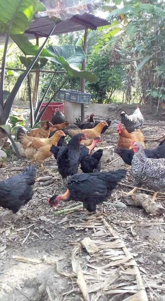 Estos son parte de los animalitos que tienen disponibles.