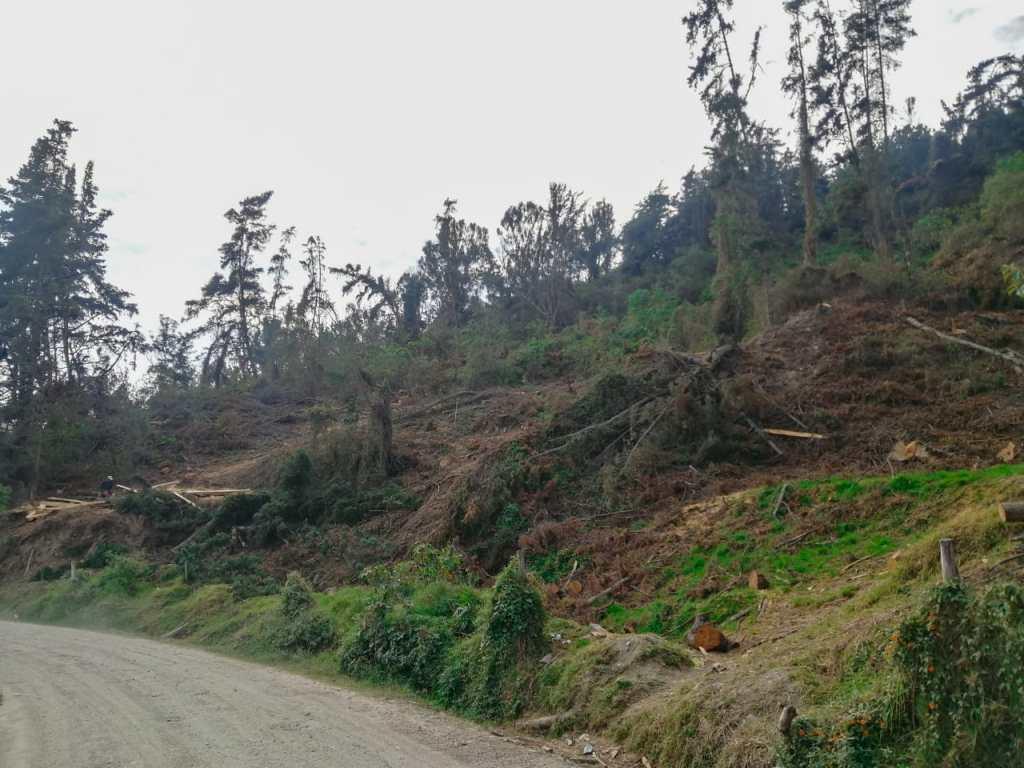 Así luce parte del área donde ya se talaron varios árboles.