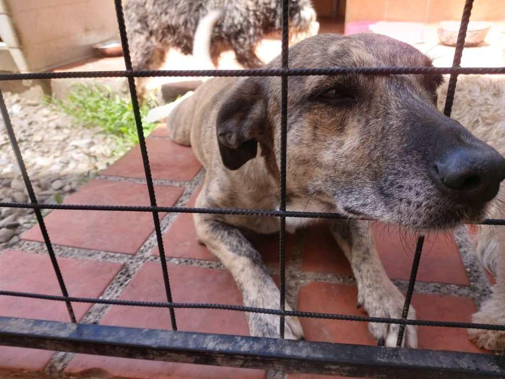 Animalistas informan que se reciben hasta cinco denuncias diarias de maltrato contra mascotas.