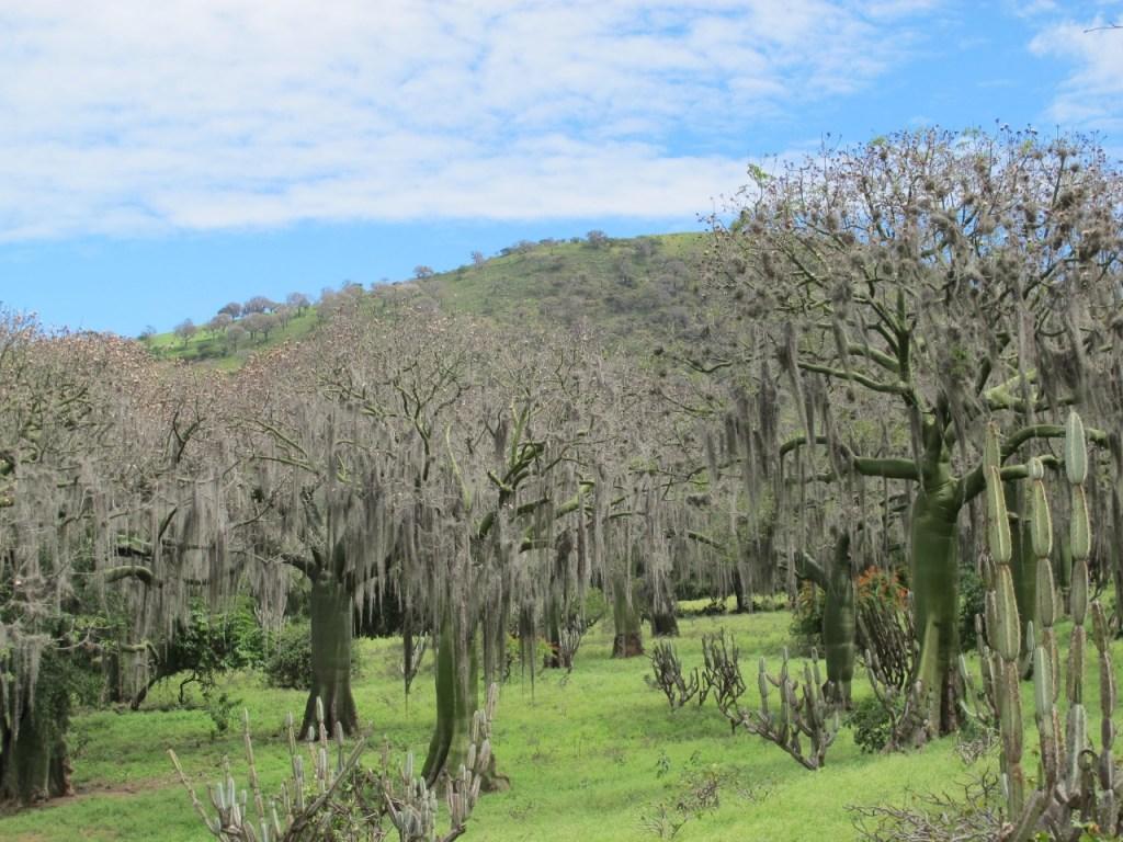 Uno de los espacios para disfrutar es el bosque de Ceibo, donde se puede ir con la familia o amigos.