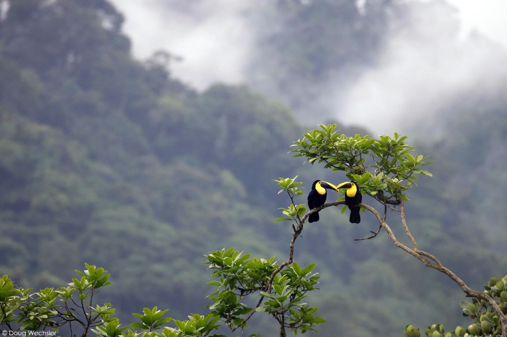 Los turistas pueden observar 320 especies de aves, a las cuáles las pueden alimentar y estudiarlas.