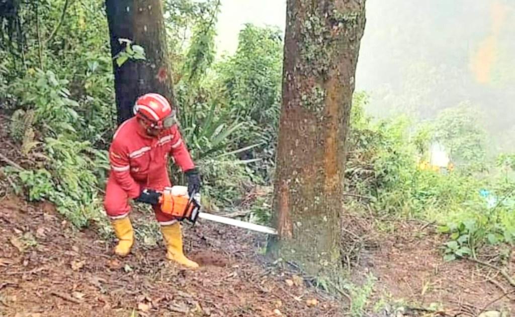 Los árboles fueron retirados del sector.