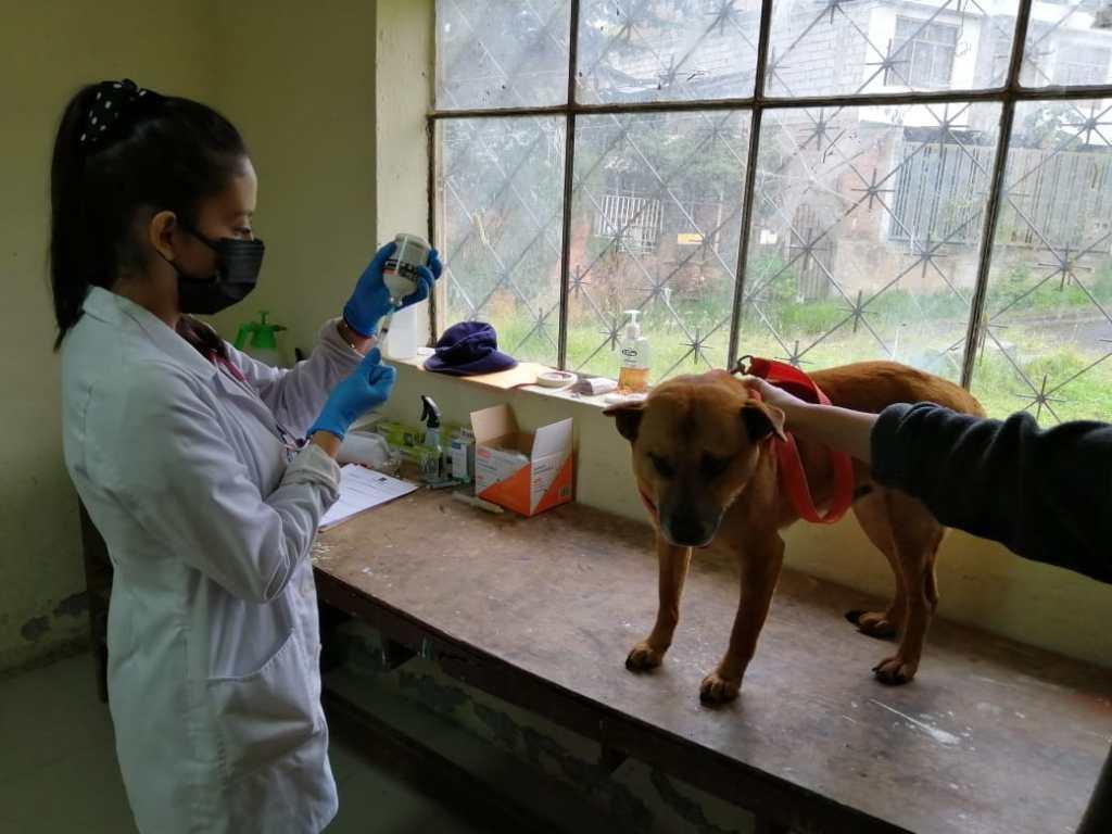 En la jornada de este domingo 7 de marzo, se aplicaron vacunas a alrededor de 150 mascotas.