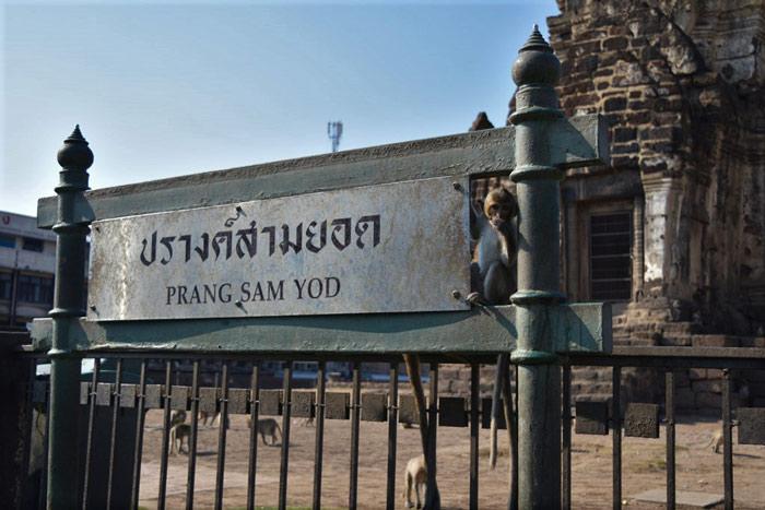 Imagen mono templo tailandia lopburi con monos