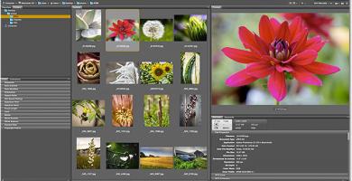 Que es Adobe Bridge y cómo administrar y organizar tus imágenes