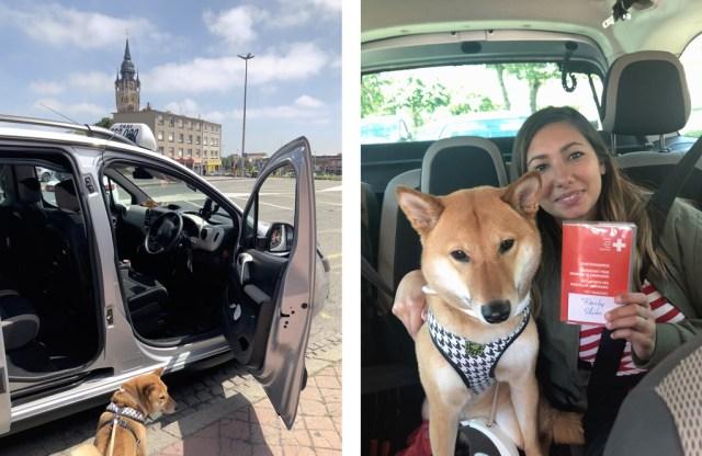 Pet Taxi Calais Folkestone