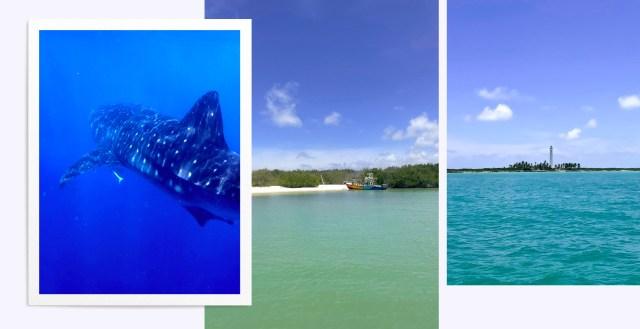 Nager avec des requins baleine à Holbox