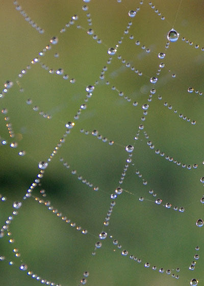 Spider Web at the Horicon Marsh