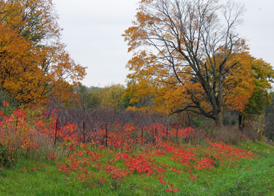 Autumn at the Horicon Marsh