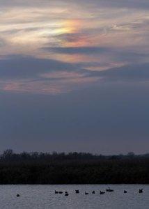 Sun Halo at the Horicon Marsh