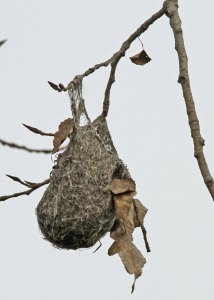 Hanging Woven Nest at the Horicon Marsh