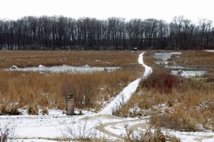 Muskrat Houses at the Horicon Marsh