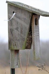 Nesting Box at the Horicon Marsh