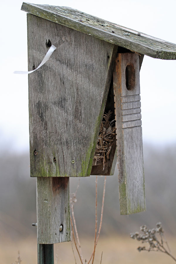 Nesting Box at the Horicon Marsh