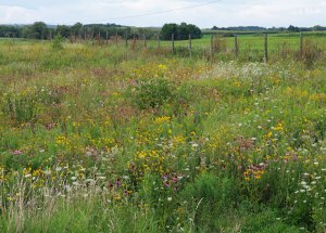 Prairie Plants at the Education and Visitors Center
