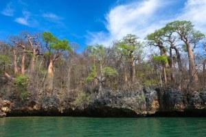 島の上にバオバオバブが立ち並ぶマダガスカルのムランバ湾