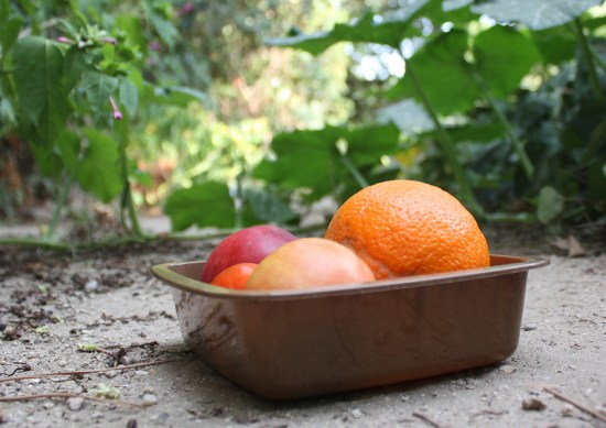 Researchers working on a project called GLOPACK are developing different solutions to tackling food waste such as these biodegradable food trays. Image credit - GLOPACK