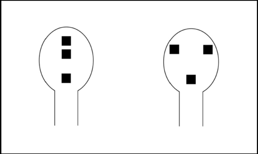 The three dots on the right, which loosely resemble two eyes and a nose, are enough to attract animals, who tend to seek out face-like shapes. Graphic courtesy of Giorgio Vallortigara
