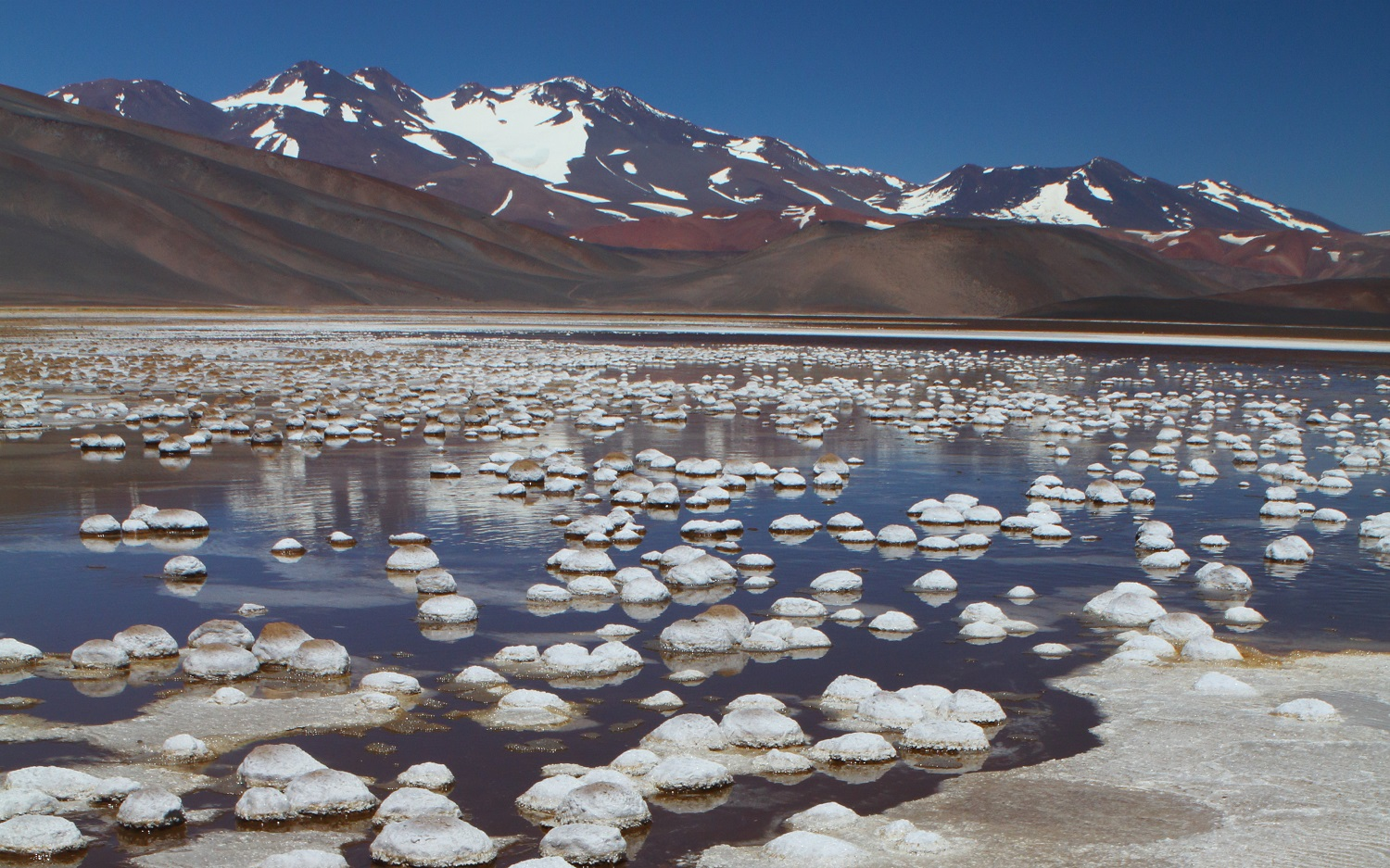 Bacteria survive in the harsh conditions of the Andean lakes of Argentina among high concentrations of arsenic.