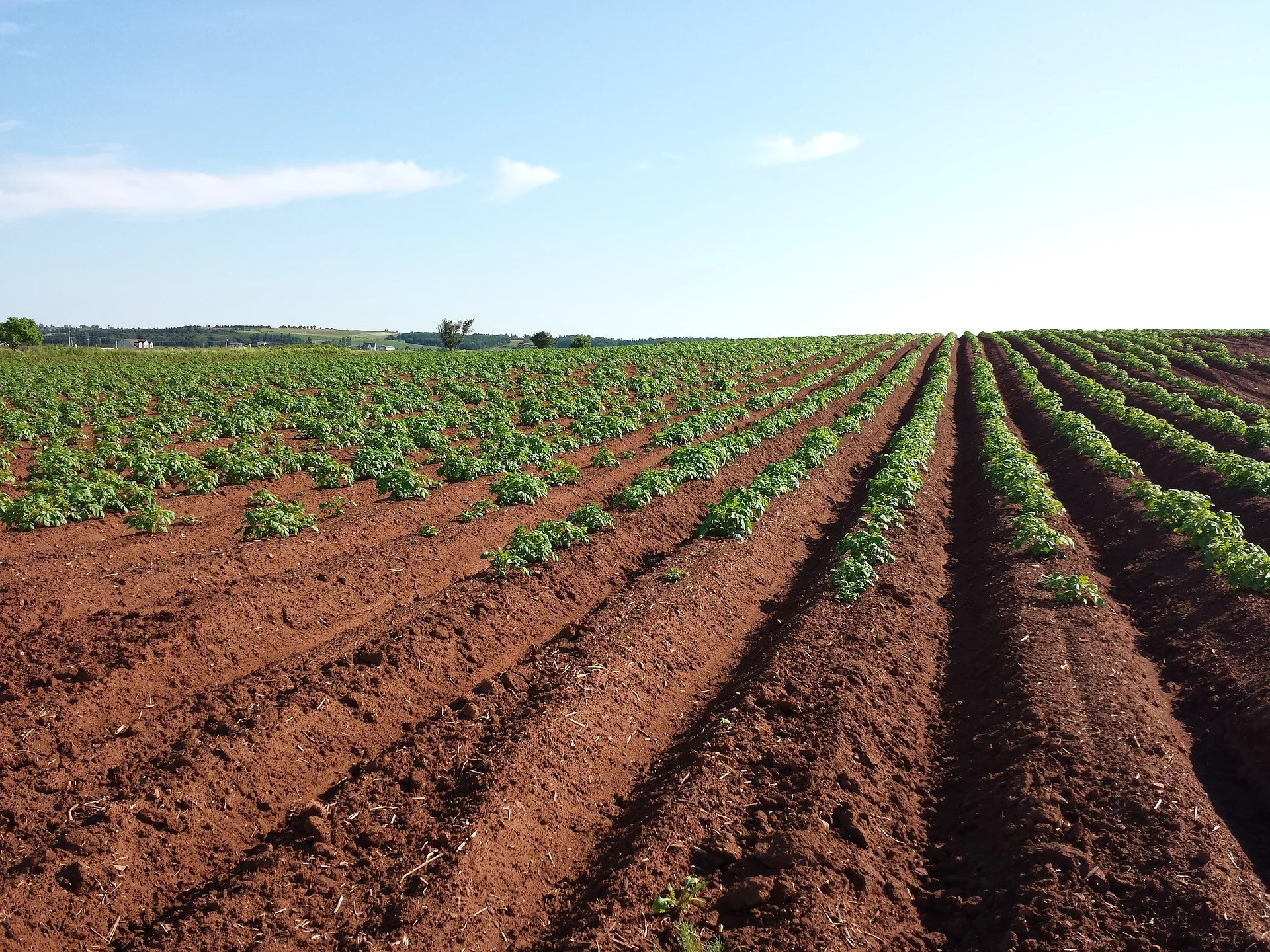 As more food than ever is being grown, it is important to find ways to promote and maintain soil quality.