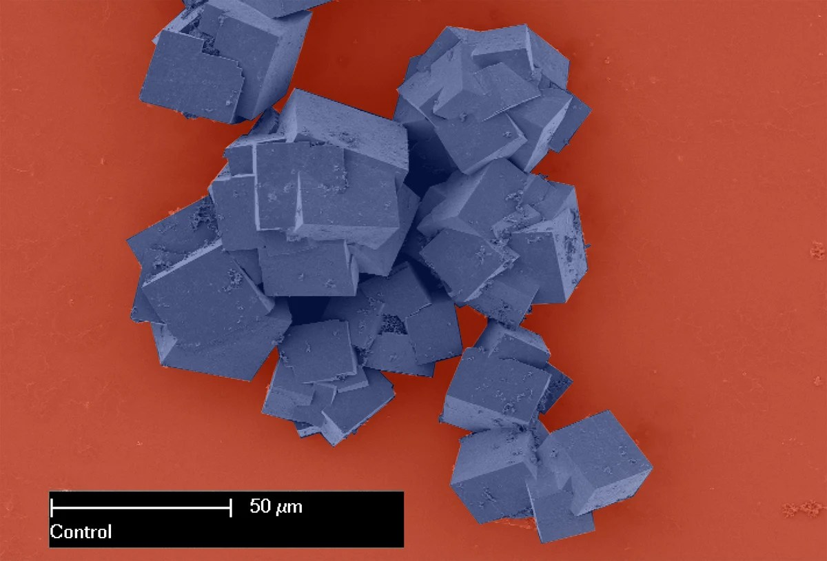 Metal-organic frameworks as seen under an electron microscope are made up of crystals that together shape multi-dimensional structures with vast surface areas. Image credit - CSIRO/ Dr Paolo Falcaro, Dr Dario Buso, licensed under CC BY 3.0 (color changed)