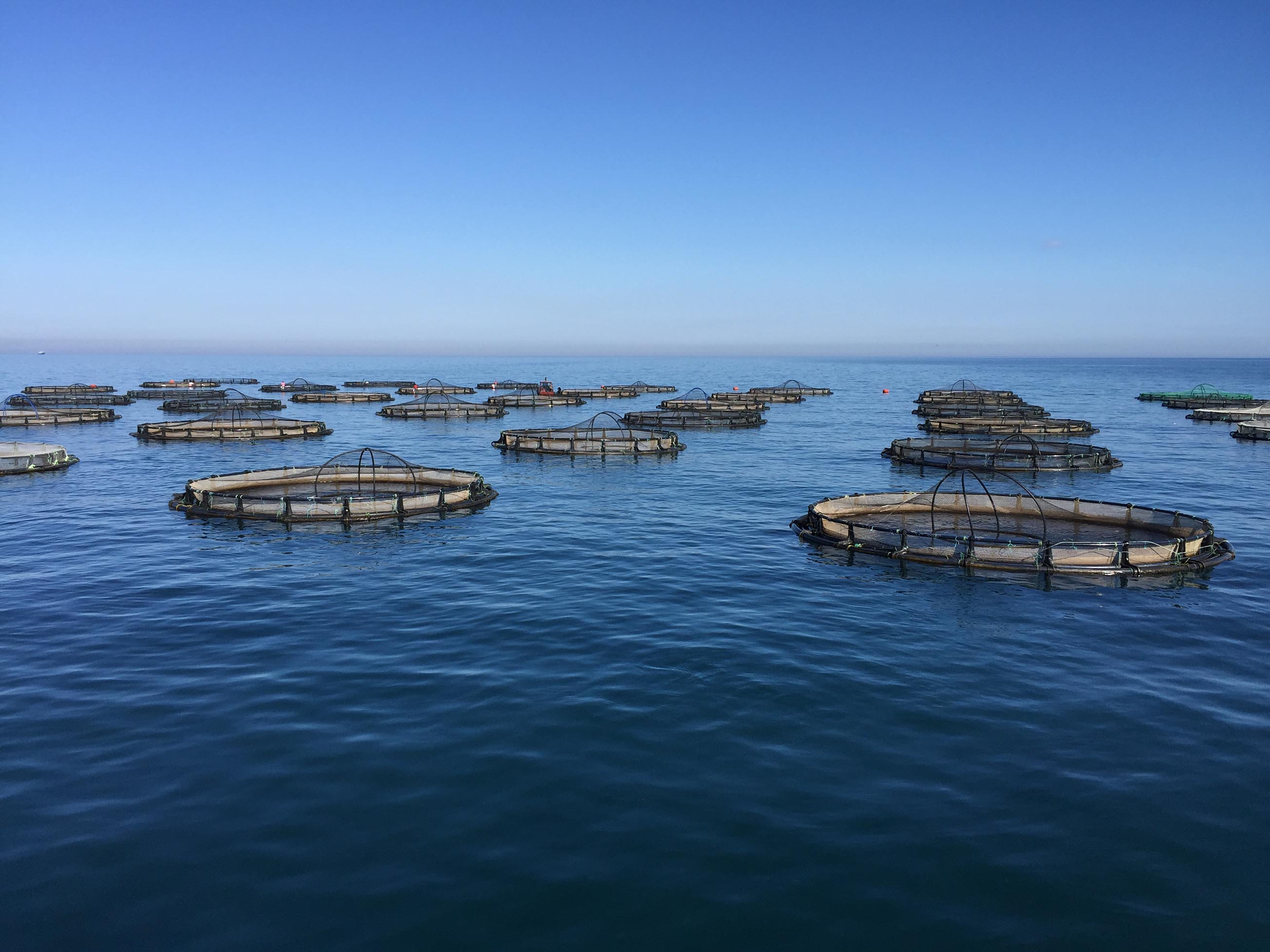 Aquaculture and fish farms must adapt to the changing sea conditions of climate change.