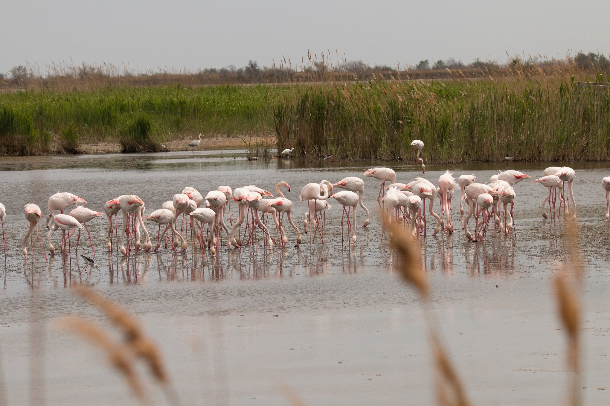 Satellite data can show environmental shifts in protected areas like the Camargue wetlands, where rising sea levels have a damaging impact.