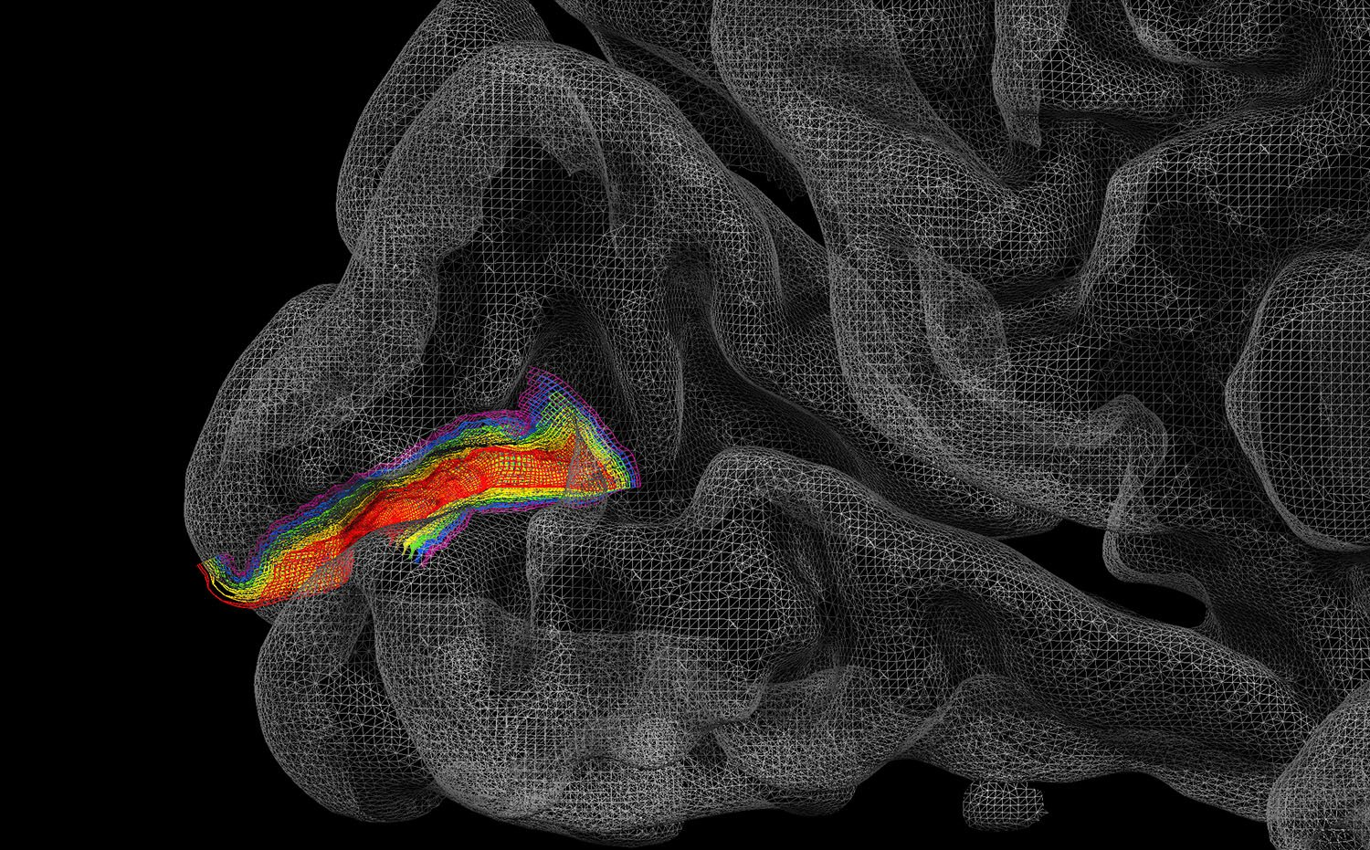 State-of-the-art functional brain imaging techniques allowed Prof. Muckli to investigate the human brain at sub-millimetre resolutions.