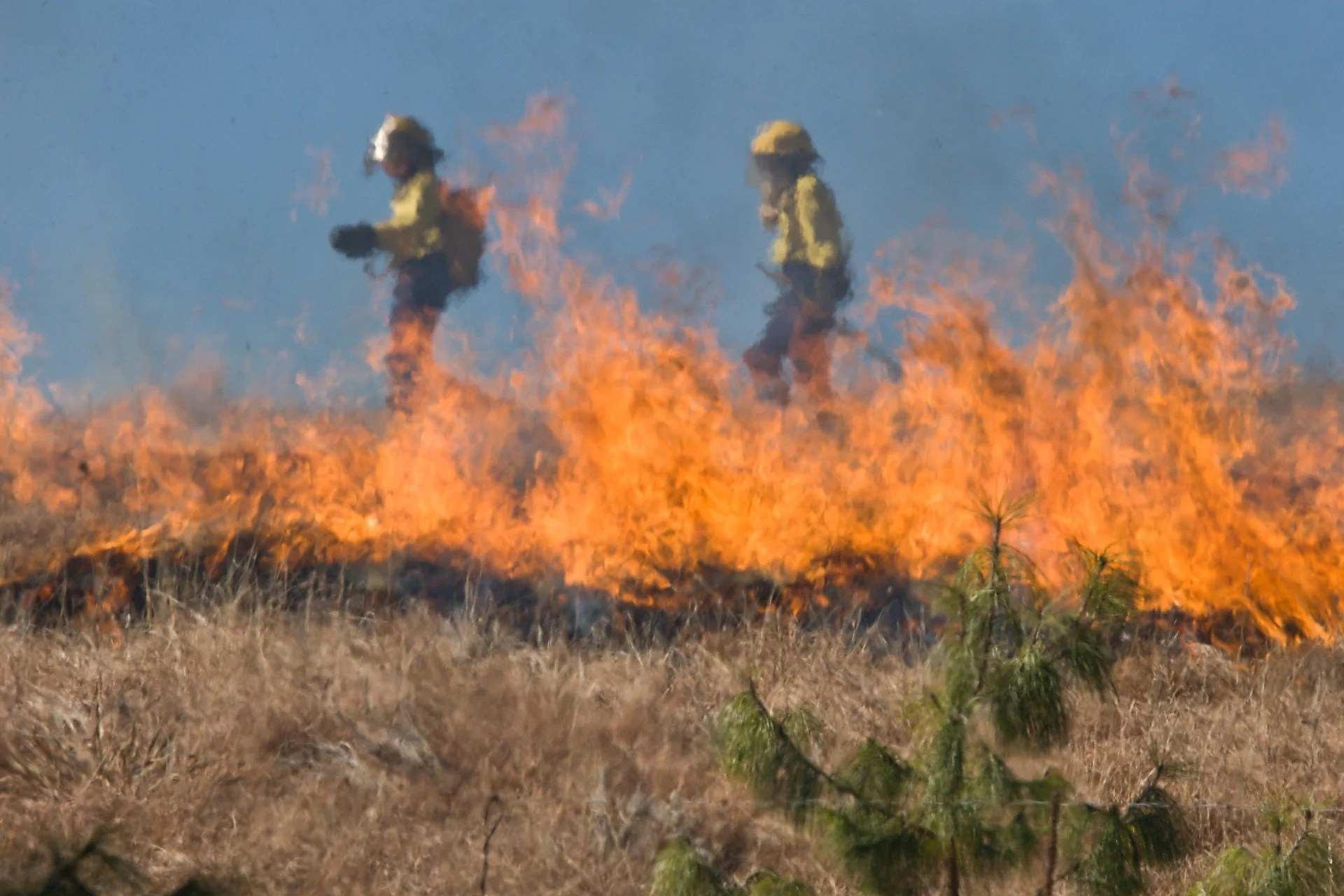 With the EUPHEME project, Prof. Stott is linking extreme heatwaves and resulting wildfires to climate change.