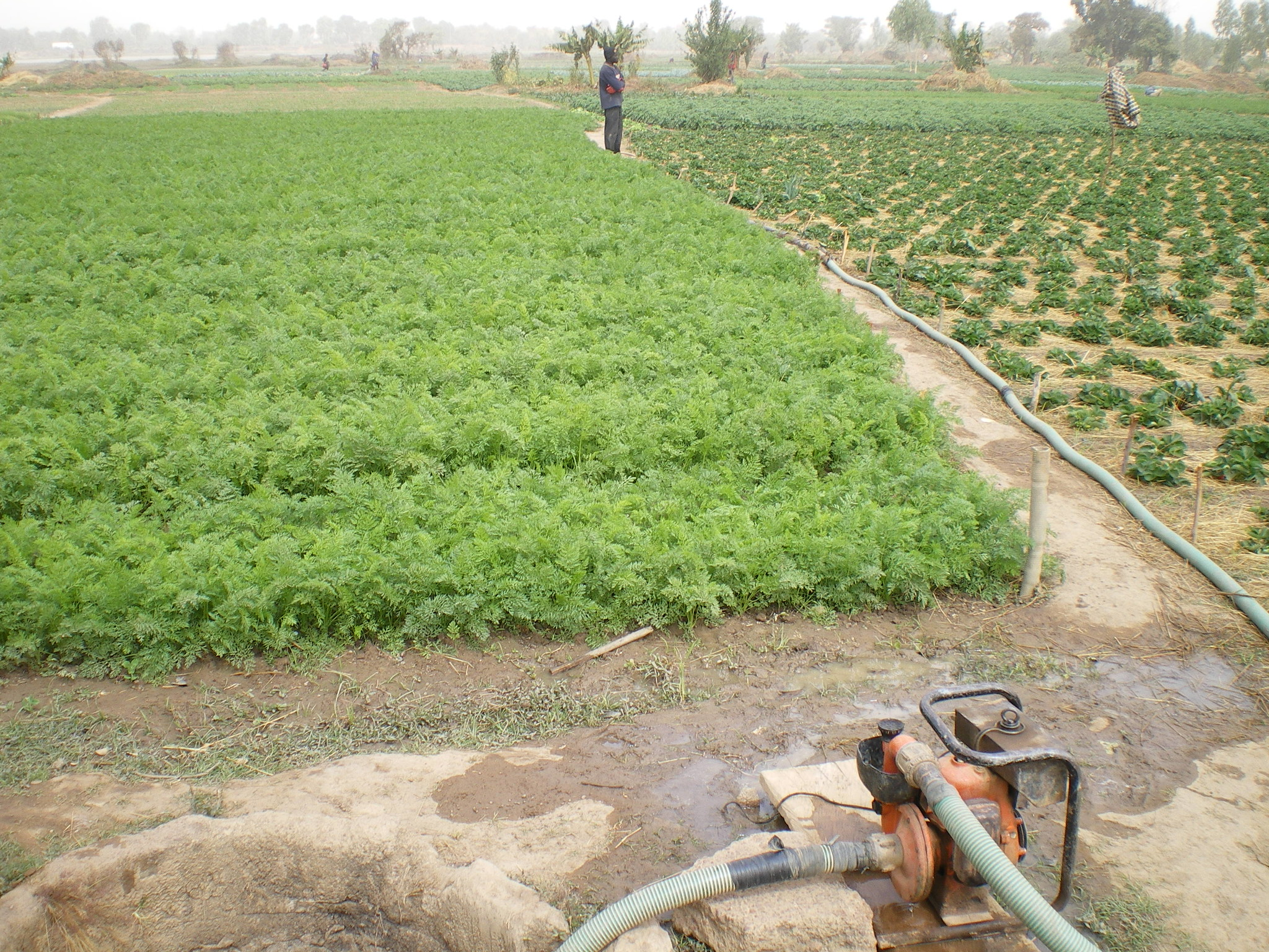 In poorer countries, using raw wastewater to irrigate urban farms could be an underlying cause of antibiotic resistance.