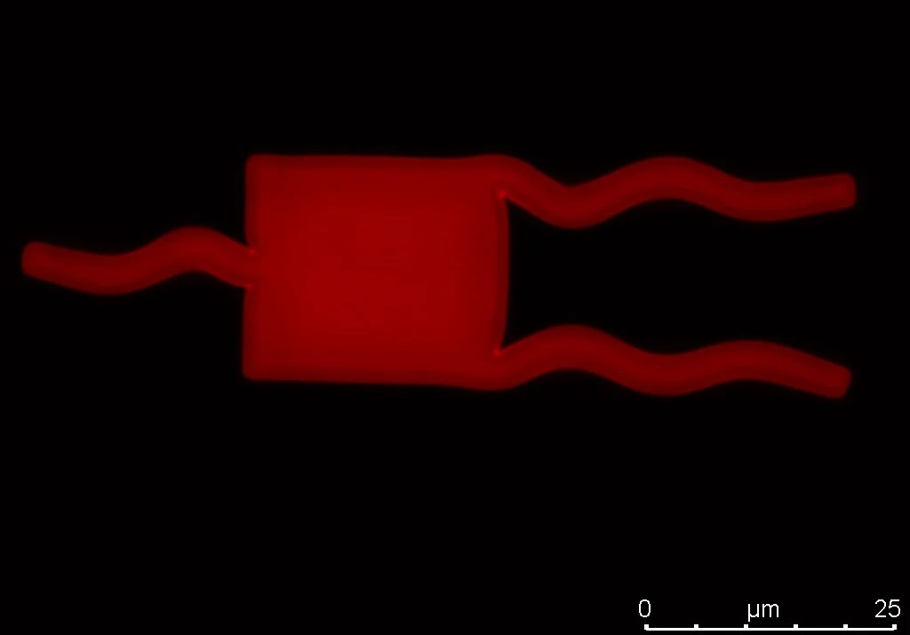 This micro-swimmer encased in a soft hydrogel-like material has fins that are mobile and can expand and contract when stimulated. Such structures could in the future be used to deliver treatments inside the human body. Image credit - Dr Florea (TBC)