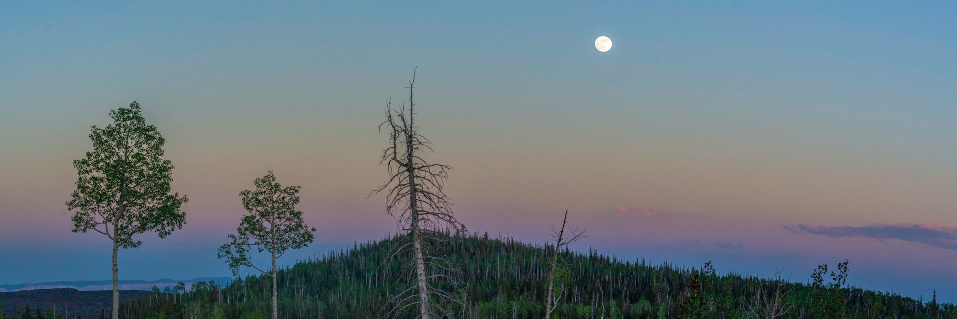 Full moon rising on the markagunt Plateau with aspens.