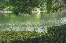 A crane hiding in the shade near a walking path in Osaka Castle Park.