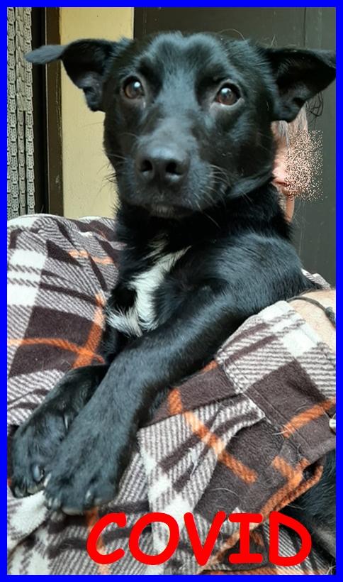 COVID tenero cucciolone 1 anno e mezzo 12 kg buonissimo e dolce