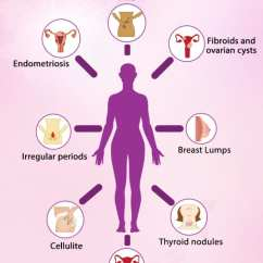 Where Is Your Gallbladder Diagram Human Digestive Tract Estrogen Dominance As Hormonal Imbalance In Women