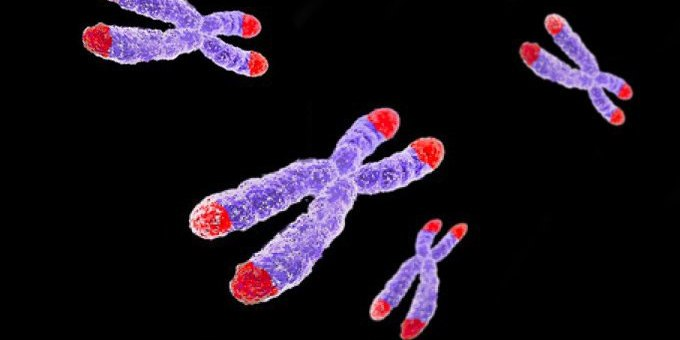 Are Telomeres the key to longevity?