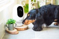 pawbo-wireless-interactive-pet-camera-and-treat-dispensersm