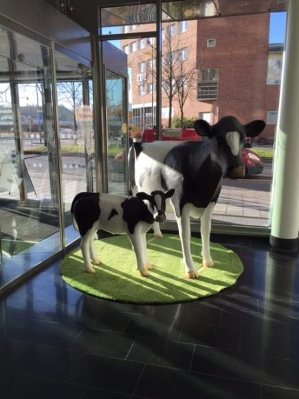 Calf & Cow in Oslo