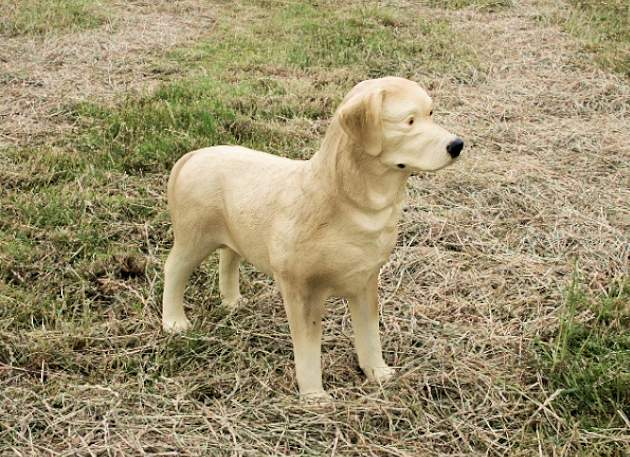 Life Size Golden Labrador Dog Standing Model