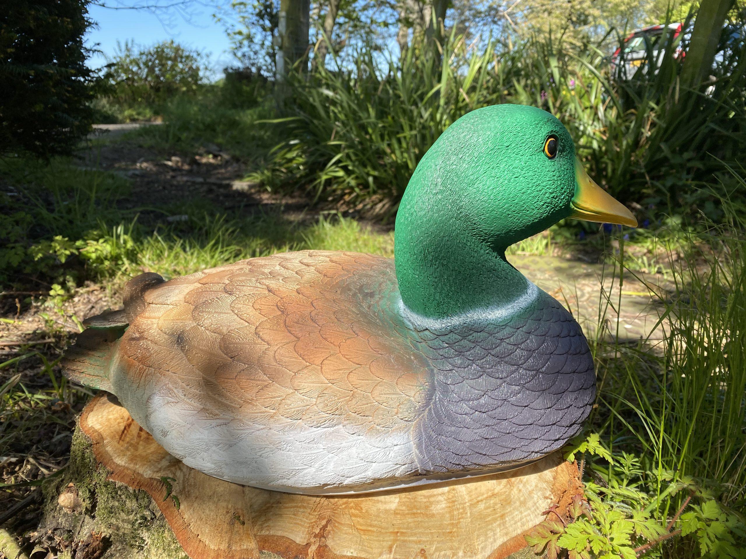 Mallard Duck Model