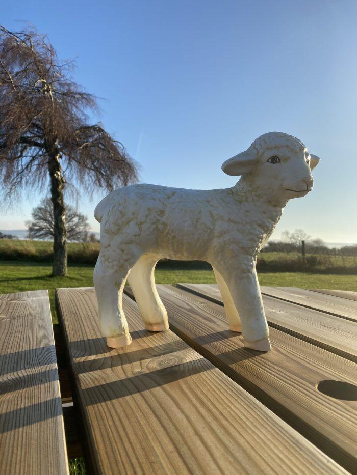 Standing Lamb Model in Sunshine