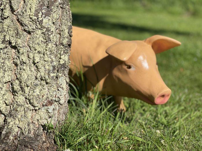 Life Size Fibreglass Piglet 3D Model hiding behind tree