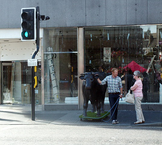 Adam Henson and 3D Life Size Model Bull in Union Street, Aberdeen