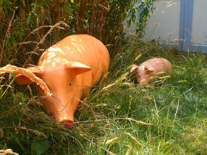 Sow Pig Model in Grass