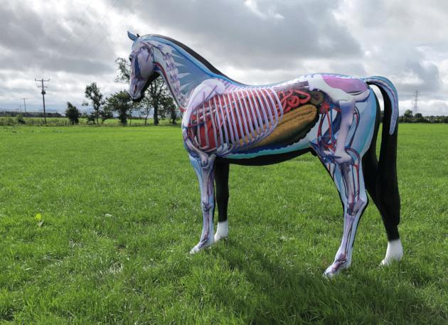 Anatomy Horse