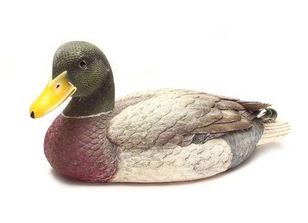 Model Mallard duck model