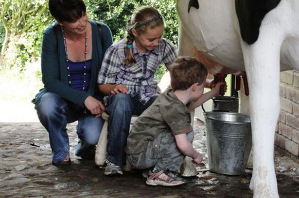 Kids milking 3D model cow at Gibside