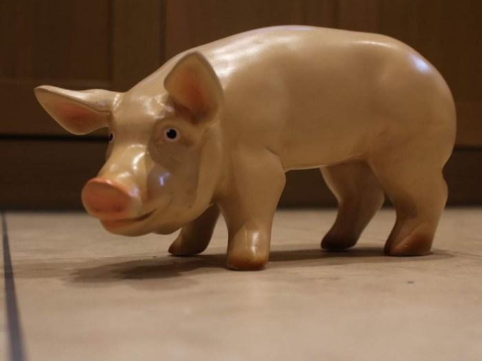 3D Mini Pig Model