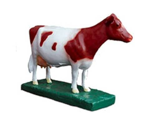 Brown and white mini cow