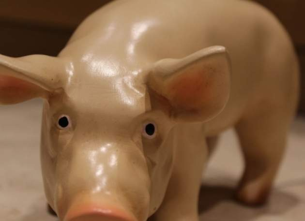 Model Mini Pig